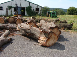 A typical assortment of logs sourced from roadsides and other urban settings in Baltimore County, Maryland.