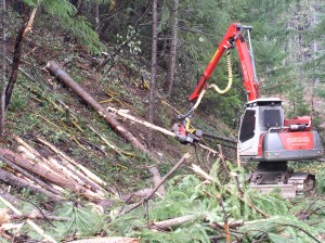 Forest biomass cleanup