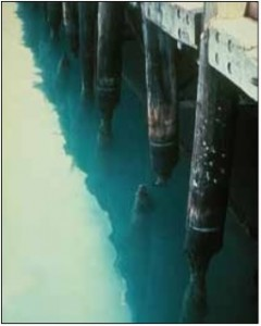 Damage to piling caused by marine borers.