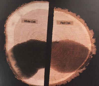Sodium nitrite test: dark purple to black indicates white oak, orange indicates red oak.