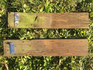 Examples of sound (rating of 10) 2 x 4 (top) and plywood field stakes after 40 years of soil contact in southern Wisconsin.