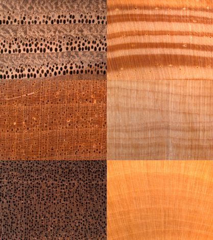 Images of the transverse surface of three hardwoods  left  and three  softwoods  right. Forest Products Laboratory   USDA Forest Service